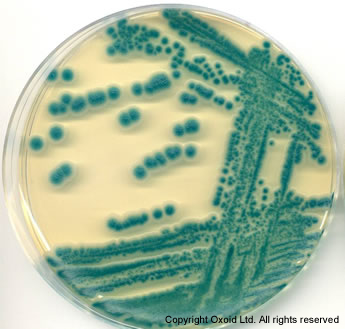 BRILLIANCE BACILLUS CEREUS AGAR